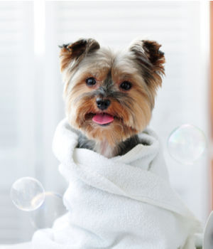 U.S. Pet Grooming Services Market Research Report